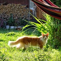 Сонячный котик