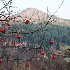 Осінні яблочки