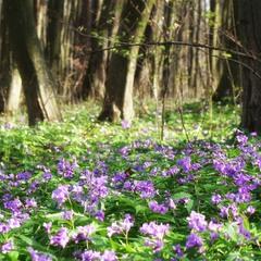 Весна торжествує!