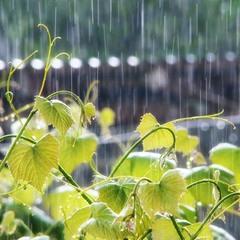 Падав літній дощ...