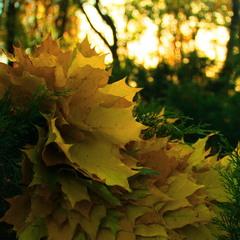 Віночок осені