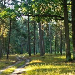Лісова казка