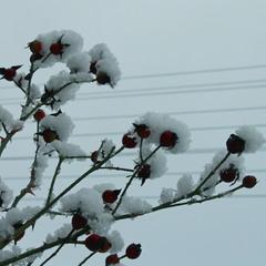 Мелодія зими