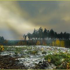 Дорогами лесными