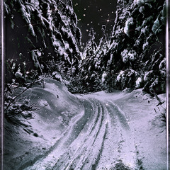 Ночная мгла растворена Луной в ночном заснеженном лесу