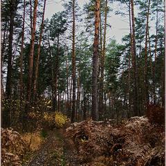 Лесными дорогами...