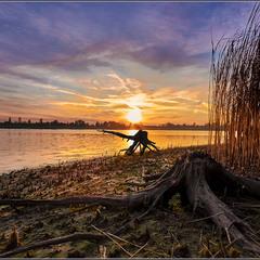 Озерный монстр-пень восьминожный