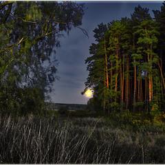 Там,  на неведомых дорожках, среди невиданных Лесов...там леший бродит под Луной...