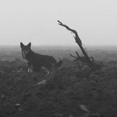 Однажды в тумане...