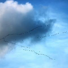 Сумно , птахи відлітають..