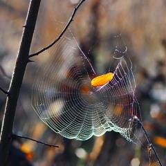 Запуталась осень в паучьих сетях