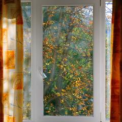 Листопад за вікном