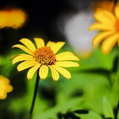 Квіточка