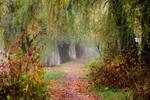 осень в тумане