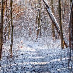 снежное утро в лесу