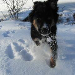 Радость снегу.