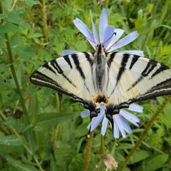 Бабочка.