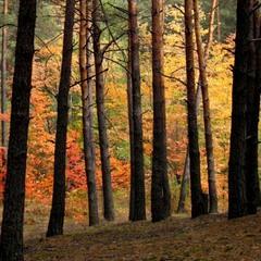 Поліська осінь