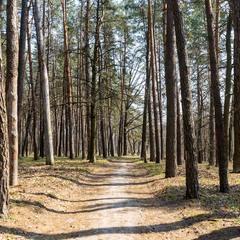 Прогулянка лісом
