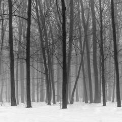 Скрізь туман