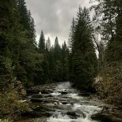 Річка Прут. Біля Говерли