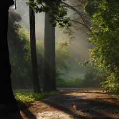 Ранок. У затінку дерев ...