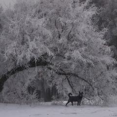 Зимове мереживо.