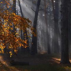 """""""Золотий резерв"""" осені."""