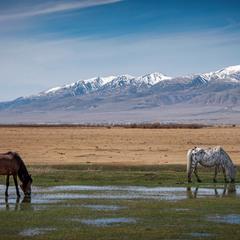 Лето в горах.....Справа редкая  порода лошади - чубарая масть.....