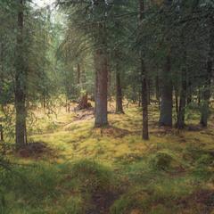 Солнечный день, в лесу...