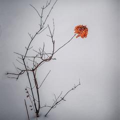 Декабрь... Замерзший кусочек лета.....