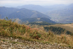 Цвет травы в горах