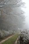 Иней-туман