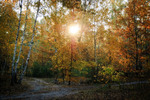 Утро сквозь осень