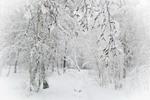 Зимний сон леса