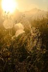 Сеть на солнечных зайчиков