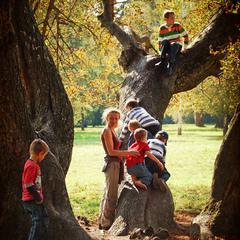 Солнечный штурм дерева