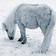 Зимний пони