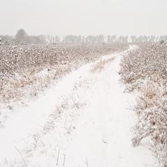 Тропа зимы