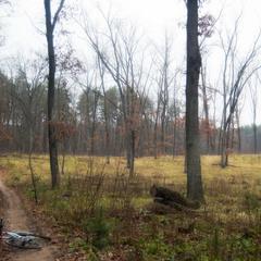 Момент ноябрьского леса