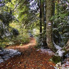 Лес по дороге на Стримбу