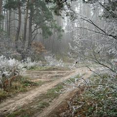 Замерзание ноября