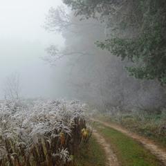 Дыхание ноября