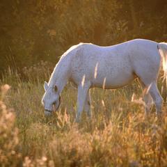 Вечерняя лошадка