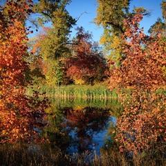 Золотая осень Гнилуши