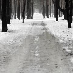 Мокрый февраль леса
