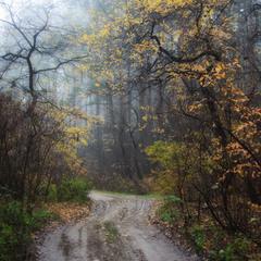 Ноябрь леса