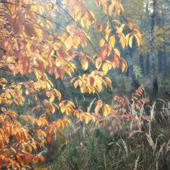 Осеннее сияние