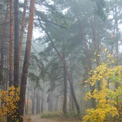 Осенняя дрёма леса