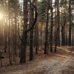 Золотистый вечер леса